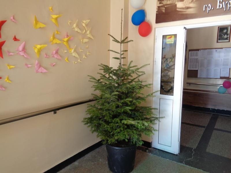 Изненада от Областна дирекция на МВР- гр. Бургас с естествена коледна елха 7.12.2018 г.